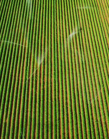 TRILITY Irrigation